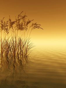 Free Water Grass Royalty Free Stock Photos - 4997158