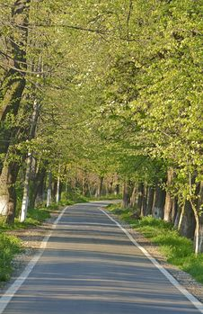 Road In A Summer Park Stock Photography