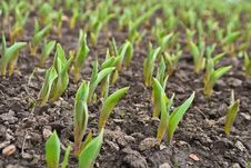Free Field With Planting Stock Photo - 4997880