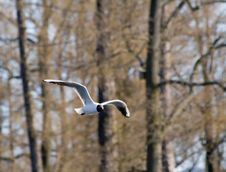 Free Sea Gull Stock Image - 4998541