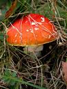Free Mushroom Royalty Free Stock Photography - 56287