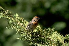 Free Backyard Bird Stock Photos - 51343