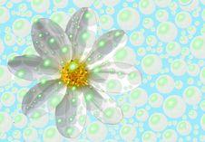 Free Bubbly Daisy Royalty Free Stock Image - 55836