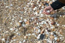 Free Collecting Seashells Stock Photography - 57732