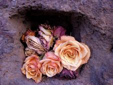 Free Dried Roses Royalty Free Stock Photography - 59247