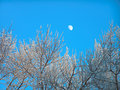Free The Moon In The Clean Blue Sky Royalty Free Stock Photography - 506027