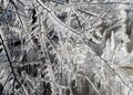 Free Frozen Branches Royalty Free Stock Photo - 508005