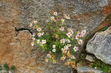 Free Flowers In The Stone Stock Images - 500094