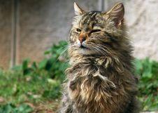 Free Cat Stock Photography - 501692