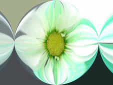 Free Marble Daisy Stock Photos - 502633