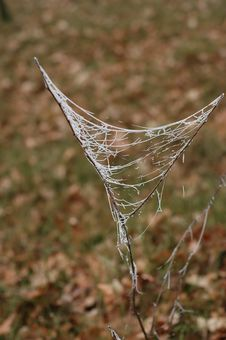 Free Frozen Spiderweb Stock Photos - 503663
