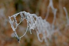 Free Frozen Spiderweb Stock Images - 503664