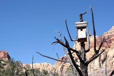 Free Desert Birdhouse Stock Photos - 505533