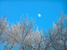The Moon In The Clean Blue Sky Royalty Free Stock Photography