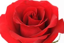 Free Red Roses For Valentine Royalty Free Stock Images - 506579