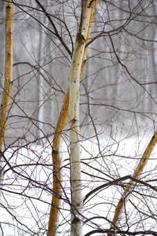 Free Snowscape Stock Photo - 507320