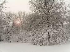 Free White Wonderland Royalty Free Stock Image - 507896