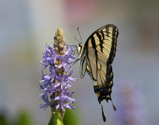 Free Butterfly Stock Photo - 507960