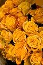 Free Yellow Roses Stock Photos - 5000053