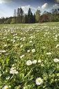 Free Spring Landscape Stock Image - 5001121