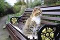 Free Tabby Cat Stock Photo - 5001400