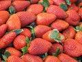 Free Garden Fresh Strawberries Stock Photo - 5004190
