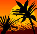 Free Tropical Sunset Royalty Free Stock Photos - 5005648