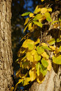 Free Leaves In Fall Stock Images - 5007924