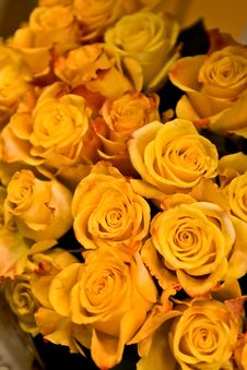 Free Yellow Roses Stock Photos - 5000053