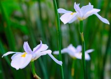 Free White Flowers Stock Images - 5000234