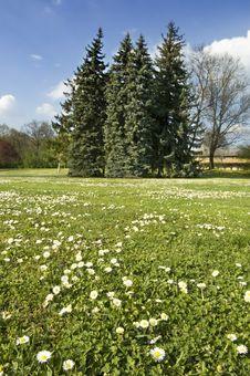 Free Spring Landscape Stock Photo - 5001120