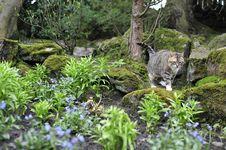 Free Tabby Cat Walking Stock Image - 5001711