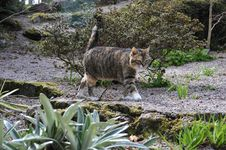 Free Tabby Cat Walking Along Stone Stock Image - 5001791