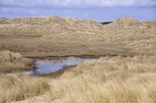 Free Marshy Sand Dunes Royalty Free Stock Photography - 5002307