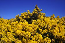 Free Large Bracken Bush Royalty Free Stock Image - 5002356