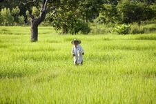 Free Work On The Rice Field Stock Photography - 5002712