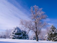 Free Frosted Park And Blue Sky Stock Photo - 5004640
