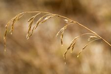 Free Grass In Dew Stock Photo - 5005120
