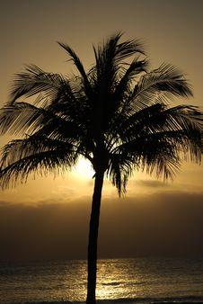 Free Palm Tree In Paradise Stock Photos - 5005763