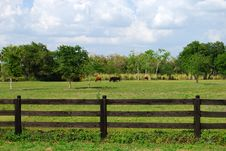 Free Cow Sighting Royalty Free Stock Image - 5005826