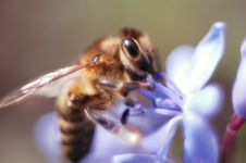 Free Extreme Close-up Of A Bee Stock Photography - 5006062