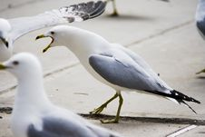 Free Seagulls At The Street Stock Image - 5006951