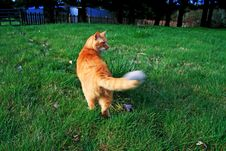 Free Attack Cat Royalty Free Stock Photo - 5007155