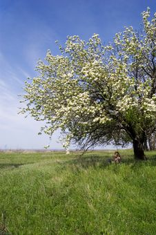 Free Girl In A Shadow Of A Blossoming Tree Stock Photography - 5008312