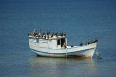 Free Boat Of Birds Royalty Free Stock Photography - 5008587