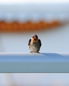 Free Bird Perched On Railing Stock Photography - 5009192