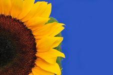 Free SunFlower Studio Series 12 Royalty Free Stock Photos - 5009898