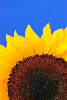 Free SunFlower Studio Series 13 Stock Photo - 5009910