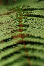 Free Fern Leaf Stock Images - 5013554