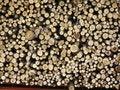 Free Logs Stock Photo - 5014240